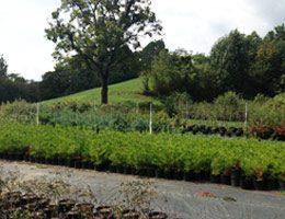 Colonial Acres Nursery Trees & Shrubs